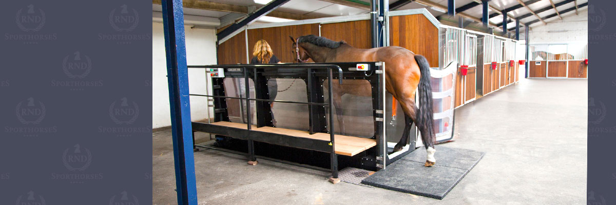 02-RND-sporthorses-12x4