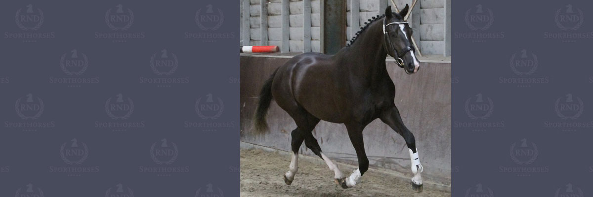 Felita-02-RND-sporthorses-12x4