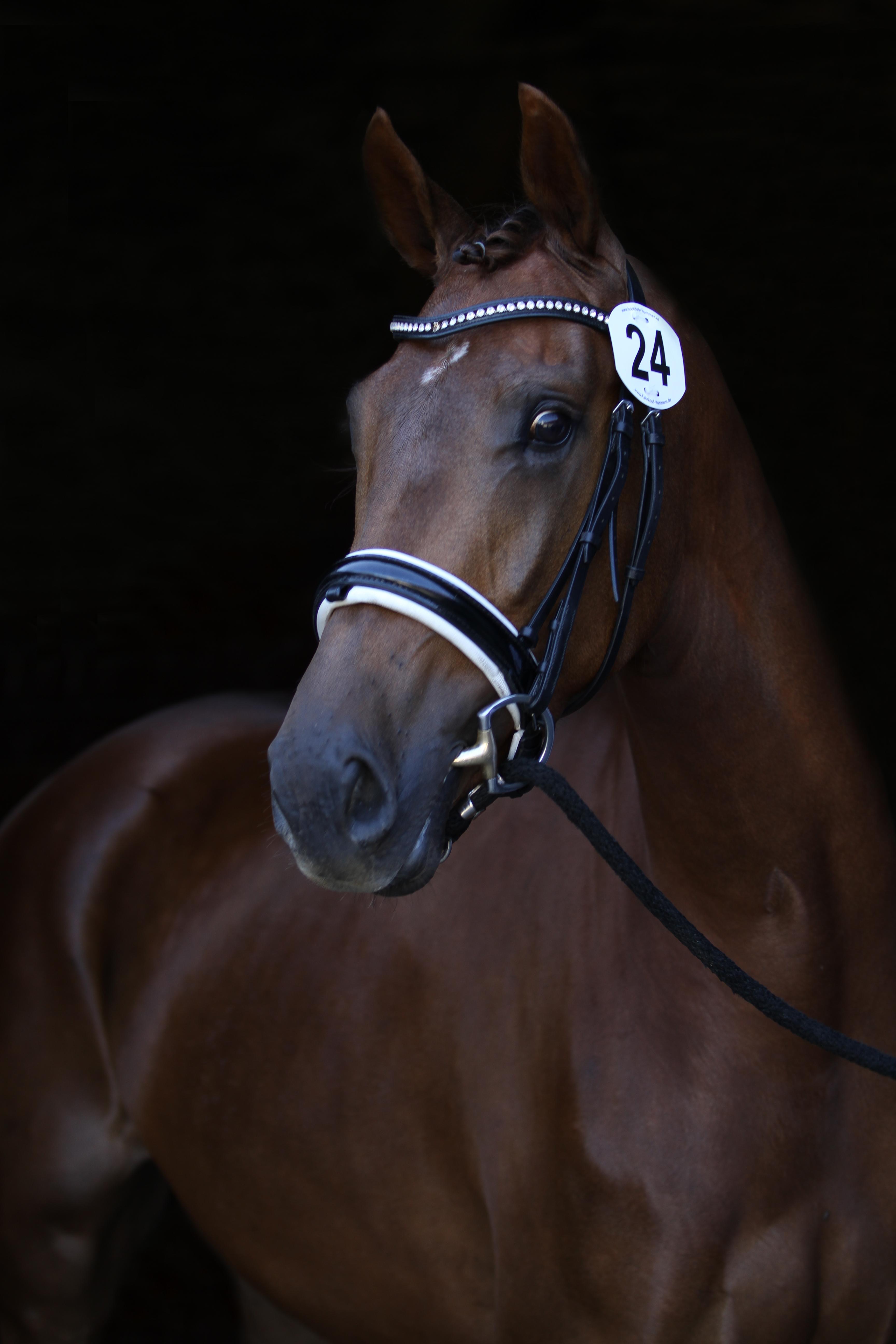 RND Sporthorses