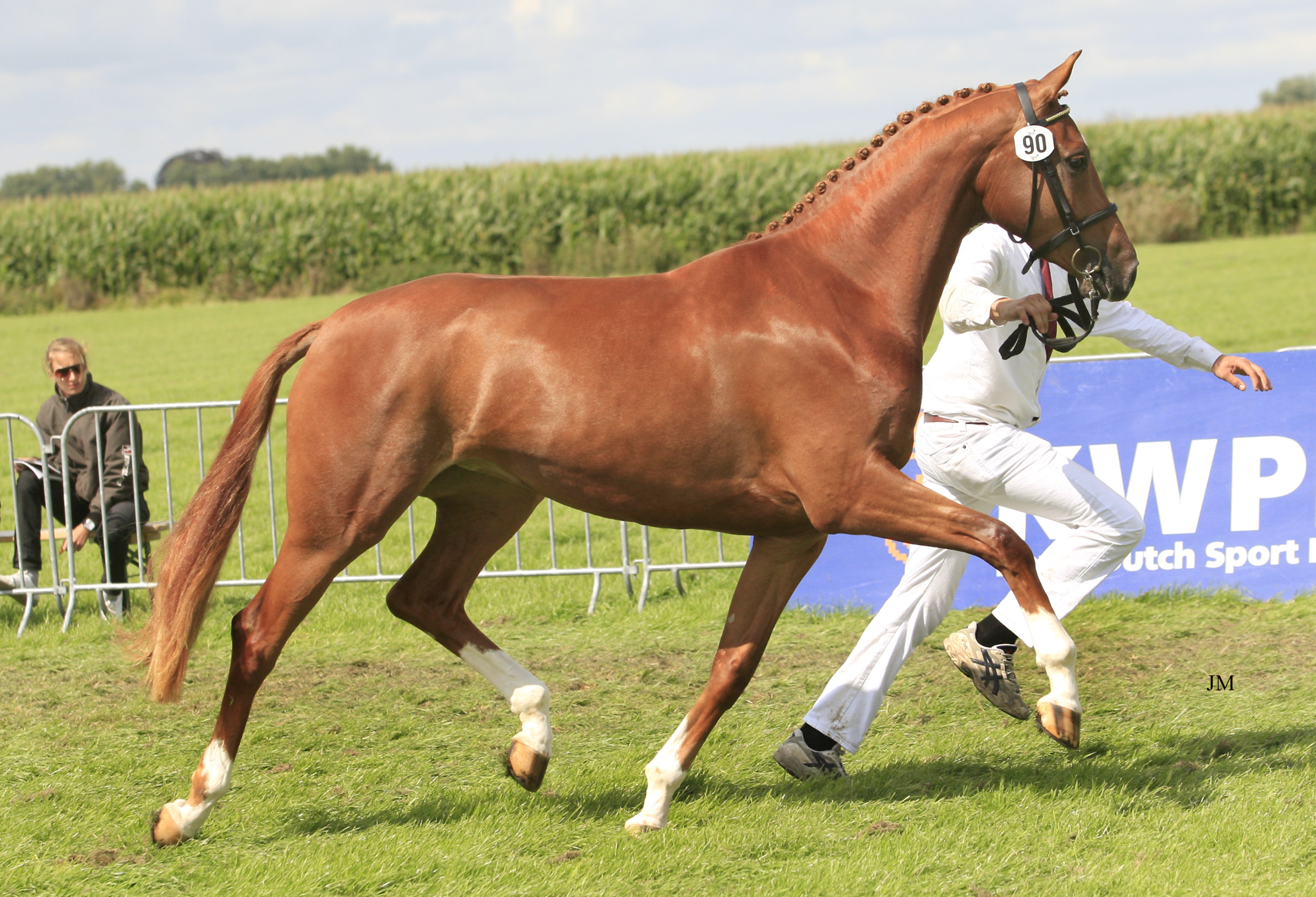 Breolita RND Sporthorses