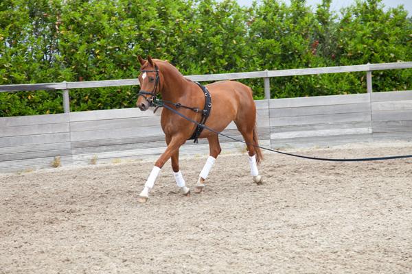 Longeerbak RND Sporthorses