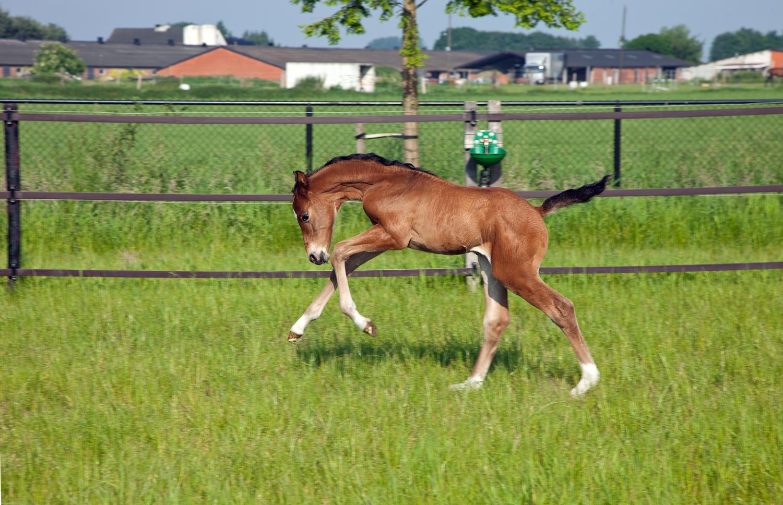 rnd-sporthorses-buiten-1500 - 33